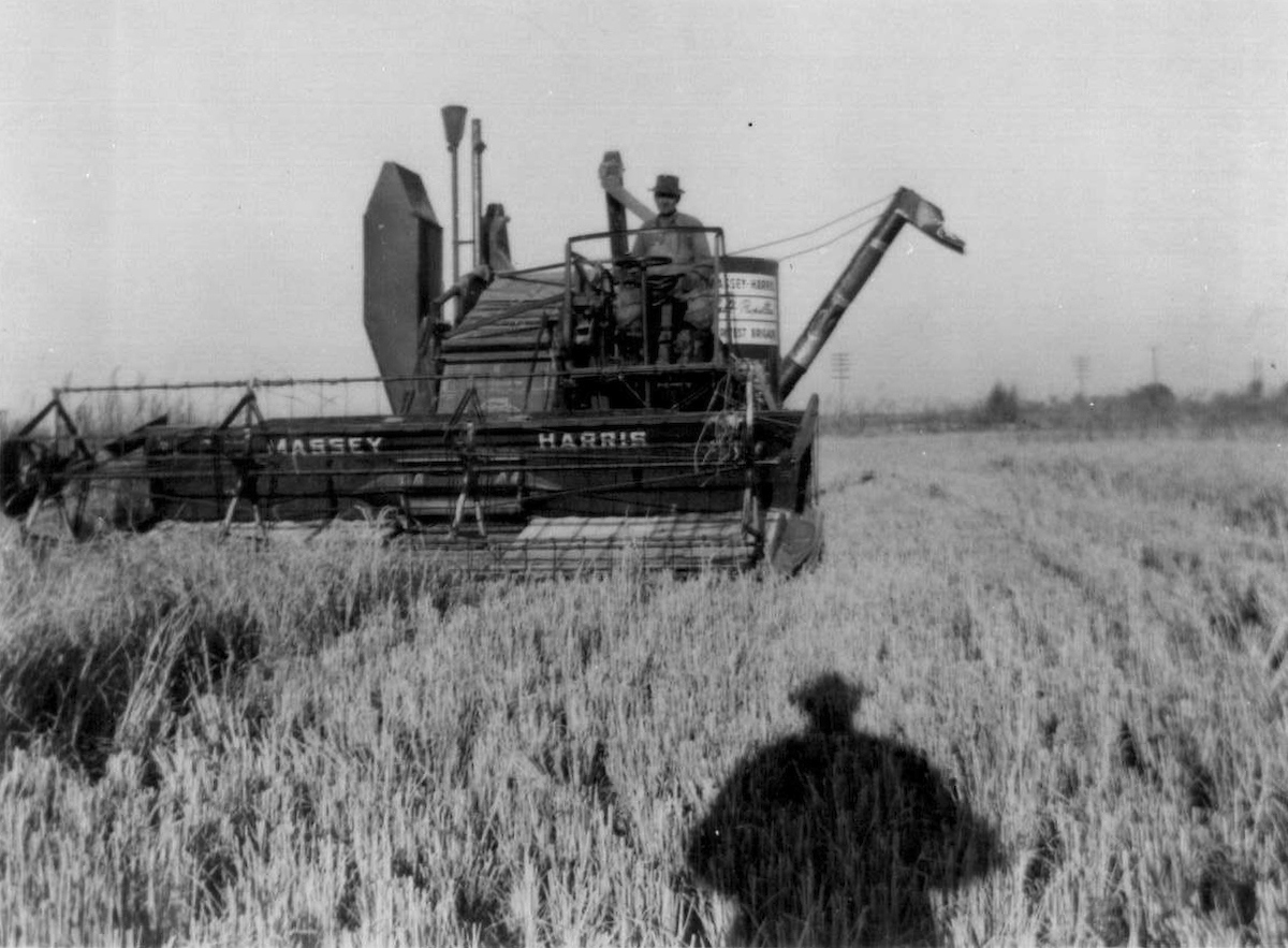 Harvesting in the early years.