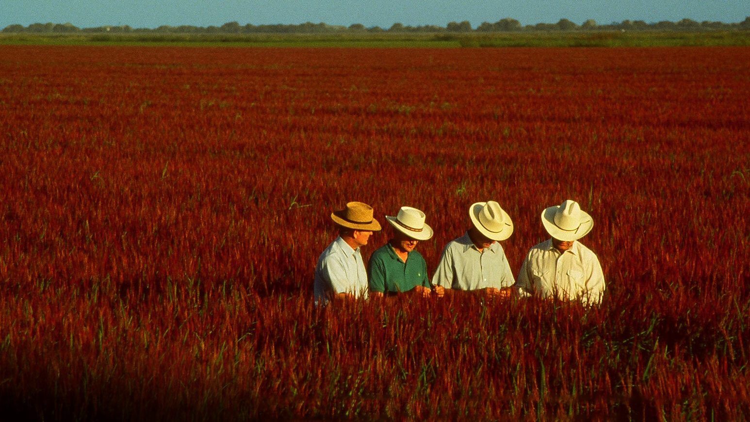 Lundberg Brothers in field of Red Rice