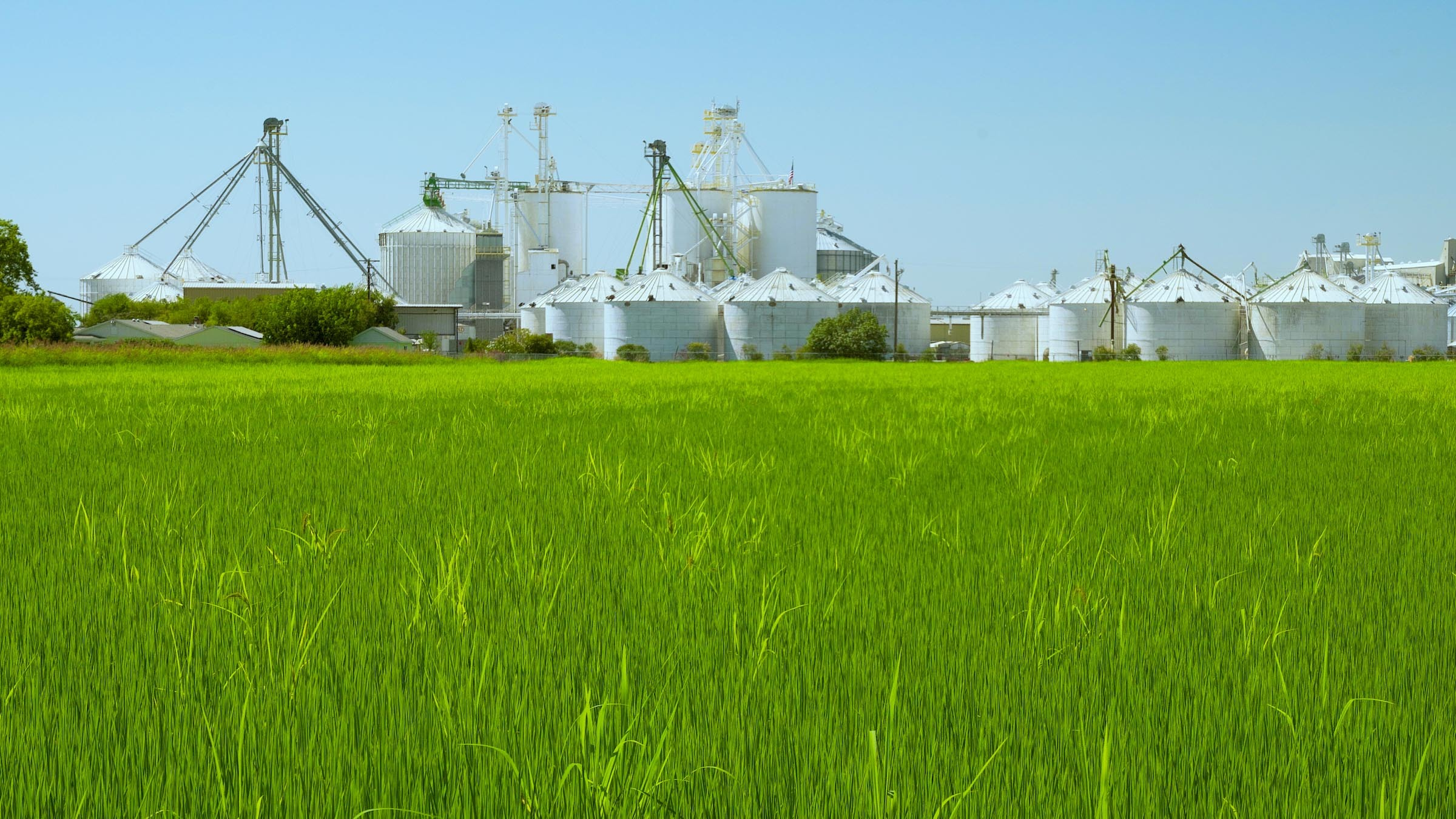 Green Rice Field in Front of Dryer and Storage